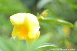 campana amarilla