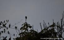 silueta de pájaro