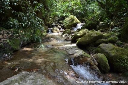 agua corre sobre piedras