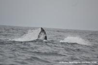 ballenas 1