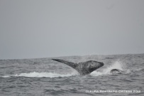 ballenas 2