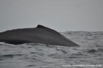ballenas 5