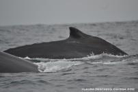 ballenas 6