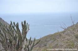 isla de la plata 2