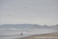 playa Ayampe 4