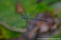 Green Dragonfly 2