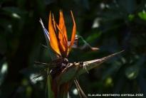 ©Laura Restrepo Ortega 2012