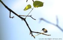 colibrí 10