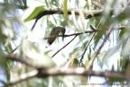 colibrí 59