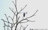 colibrí 62