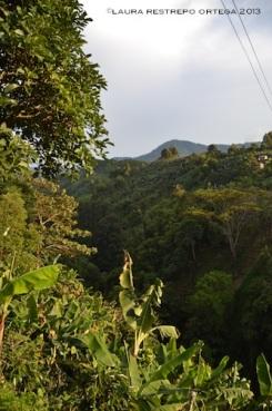 montañas jardin 3