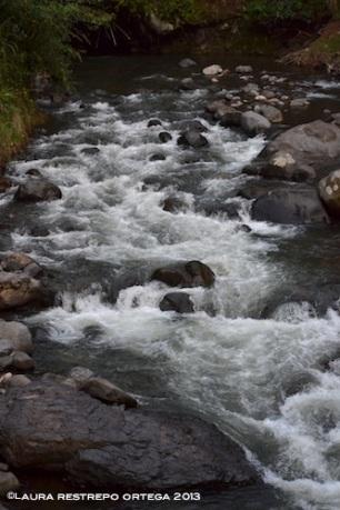 rio jardin 1