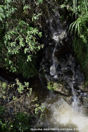 rio jardin 2