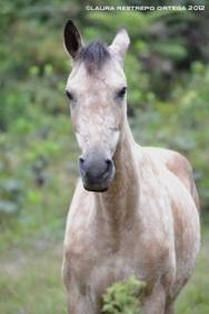 24-caballo
