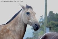 27-caballo