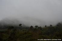39-neblina