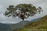 52-árbol