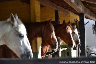 1 - caballos, establo