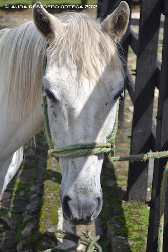 12 - caballo, bolero