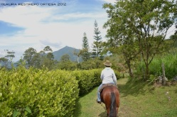25 - a caballo