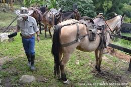 9 - tío, caballos
