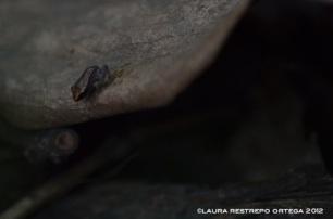 amphibians 12