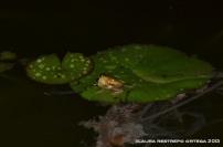 amphibians 25