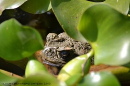 amphibians 32