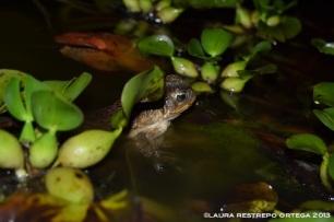 amphibians 34