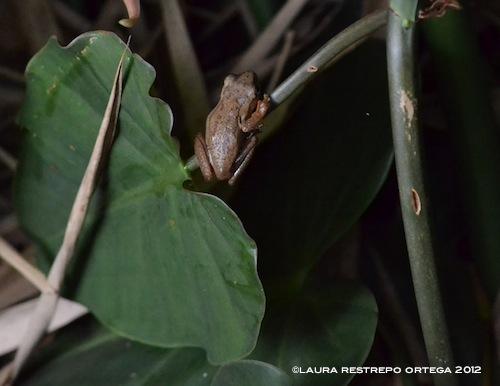 amphibians 5
