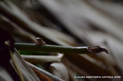 amphibians 6