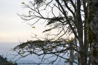 guayacán y montañas
