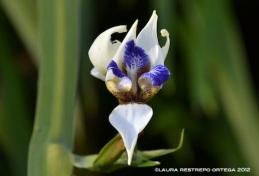 orquídea 2