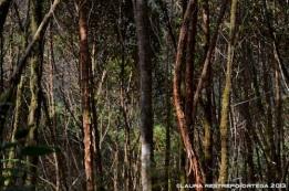 bosque 4