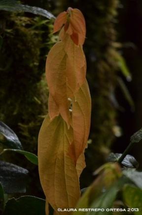 hojas 4
