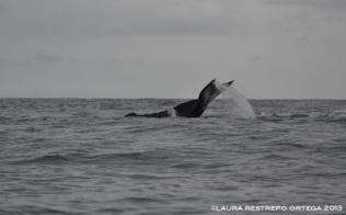 100 -ballenas 2
