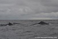 104 -ballenas 6