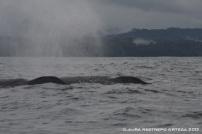 106 -ballenas 8