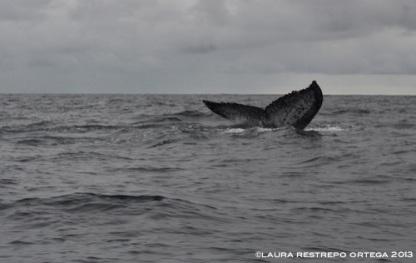 109 -ballenas 11