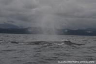 110 -ballenas 12