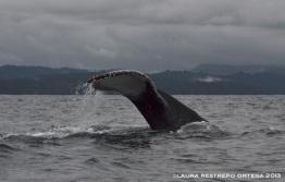 112 -ballenas 14