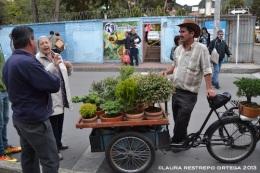 150 vendedor de bonsai