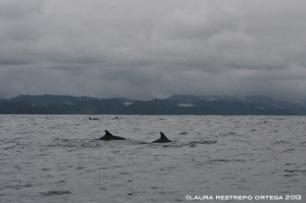 98 -delfines