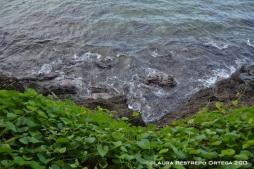 47 cabo tiburon 8 rocas