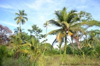 sapzurro 31 palmas