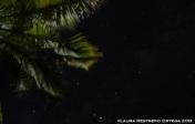 sapzurro 51 palmera estrellas