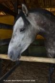 venecia 14 caballo