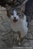 venecia 15 gato