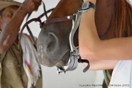 caballos 14