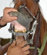 caballos 19